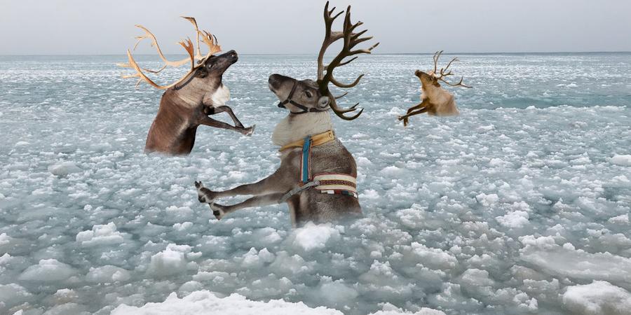 reindeerdrowning