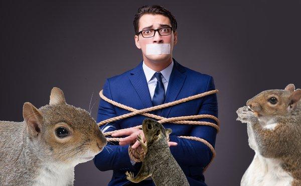 squirrel hostage
